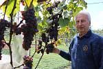 Proti náletům špačků chrání František Jakubík svůj vinohrad ve Zlechově sítěmi.