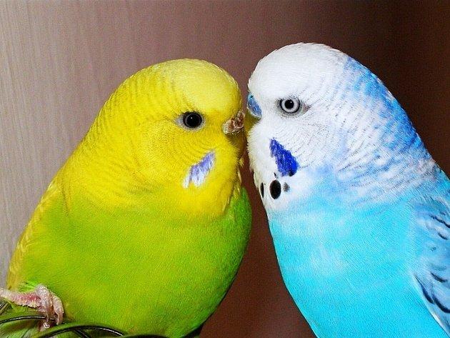 ENDÍK A ROZÁRKA.  Jsou  miláčci, ale i spolu velcí milenci.
