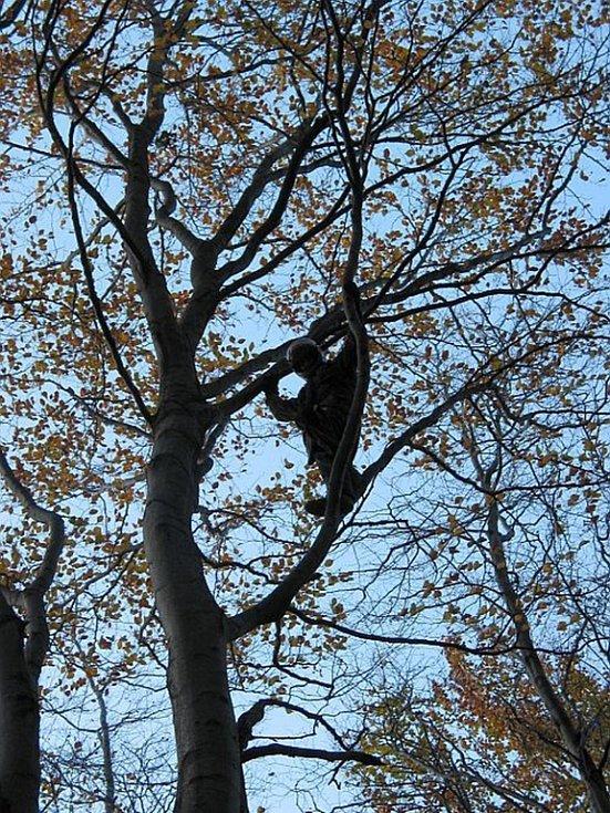 Hasiči pomáhali paraglidistovi uvízlému na stromě.