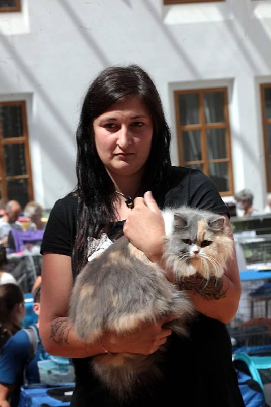 Výstava koček na zámku Nový Světlov.