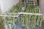 Kriminalisté při domovní prohlídce rodinného domu na Uherskohradišťsku objevili promyšlenou pěstírnu konopí.