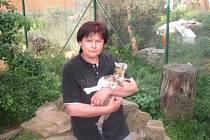 Sama vedoucí Kočičího depozita Flíček v Nedakonicích Jarmila Zlámalíková má k ke kočkám velmi vřelý vztah.
