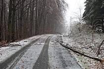 Větve se pod tíhou ledu lámou a padají.