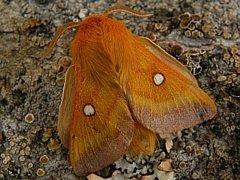 V lokalitě Bánovský potok se nachází například chráněný noční motýl bourovec trnkový. Také kvůli jeho ochraně chce kraj omezit činnost v tomto místě.