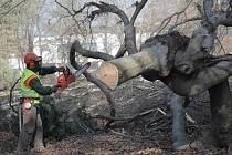 Z areálu hradišťské nemocnice už zmizela řada stromů vloni v březnu. Další kácení dvaceti devíti stromů je naplánováno i na letošek. Ilustrační foto.