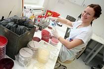 Slavnostní otevření oddělení klinické mikrobiologie a imunologie v Uherskohradišťské nemocnici. Laboratoř klinické bakterologie.