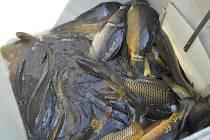 Vodní svět v areálu Salaš Mlýn rozšířily další dva metráky ryb.