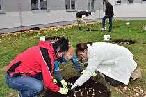 Nové tulipány, krokusy a narcisy zasadila desítka dobrovolníků ze společnosti Hamé v Uherskohradišťské nemocnici. Na přelomu října a listopadu se do zvelebování záhonů a samotného sázení zapojili kromě zaměstnanců i marketingová ředitelka Lenka Vaněk a fi