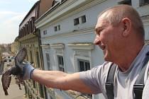 Bohumil Michalec v tomto období začíná po uherskohradišťských střechách sbírat holubí vajíčka i čerstvá mláďata.