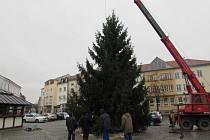 Uherskohradišťský vánoční strom přivezli z jarošovského sídliště.