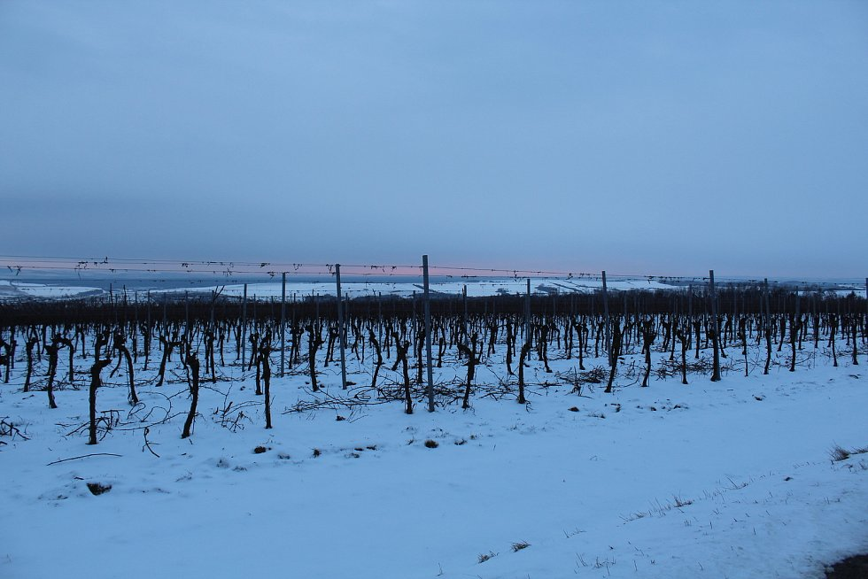 Hostějov se sněhovou pokrývkou. Vinice u Hostějova nad Syrovínem.