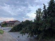Poryvy větru pokácely smrky v Polešovicích.