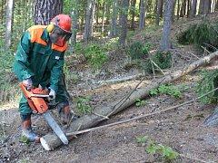 Vedení hradišťské radnice věří, že nový nájemce se bude o městské lesy dobře starat a pro městskou pokladnu bude pronájem výhodný.