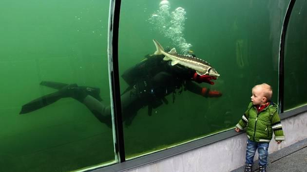 POHLED Z TUNELU. V botanické expozici Živá voda bylo na sklonku týdne opravdu živo.
