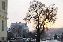 Vyhnilá lípa ohrožovala lidi v centru obce.