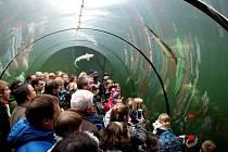 POHLED Z TUNELU. V botanické expozici Živá voda bylo v neděli po Štěpánu opravdu živo.