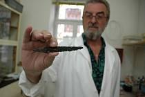 """I přes neustálé """"nájezdy"""" hledačů s detektory se týmu provádějícímu v lokalitě výzkum podařilo objevit také vzácné kovové předměty, jako je například tento nůž."""