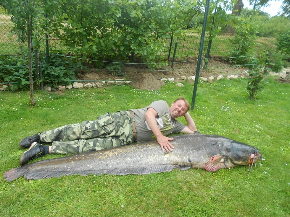Soutěžní číslo 72 – Jaroslav Strmiska, sumec, 241 cm, 83 kg, uloven v řece Moravě.