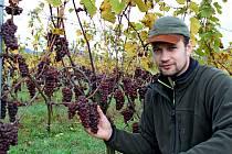 Vedoucí vinic vAgro Zlechov Vlastimil Kňourek.