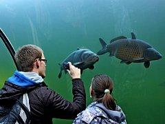 Premiérový ročník akce s názvem Rybářovy žně přilákal do biocentra Živá v voda v Modré stovky lidí.