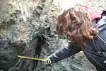 Archeoložka Dana Menoušková při odkrývání nalezené palisády.
