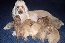 Fenka Abby a její potomci.