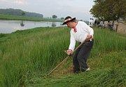 Sečéní pešuňků na břehu řeky Moravy se neobešlo bez zpěvu a dobré zábavy.