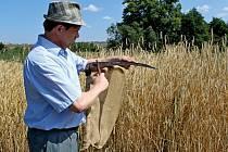 PREMIÉRA. Z iniciativy Františka Černého se v sobotu uskutečnila v Sadech první etapa druhého ročníku Kunovického mlácení, a to kosení žita.