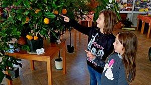 Výstava ovoce a zeleniny v Redutě