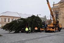 Svůj vánoční strom mohou od pondělí 19. listopadu obdivovat v Uherském Brodě na Masarykově náměstí. Třináctimetrový smrk se tam bude rozsvěcovat už v sobotu 24. listopadu.