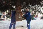 Ve středečních dopoledních hodinách přivezly pracovní čety na Masarykovo náměstí v Uherském Hradišti vánoční strom. Ten letošní měří téměř dvanáct metrů a pochází z Mařatic.