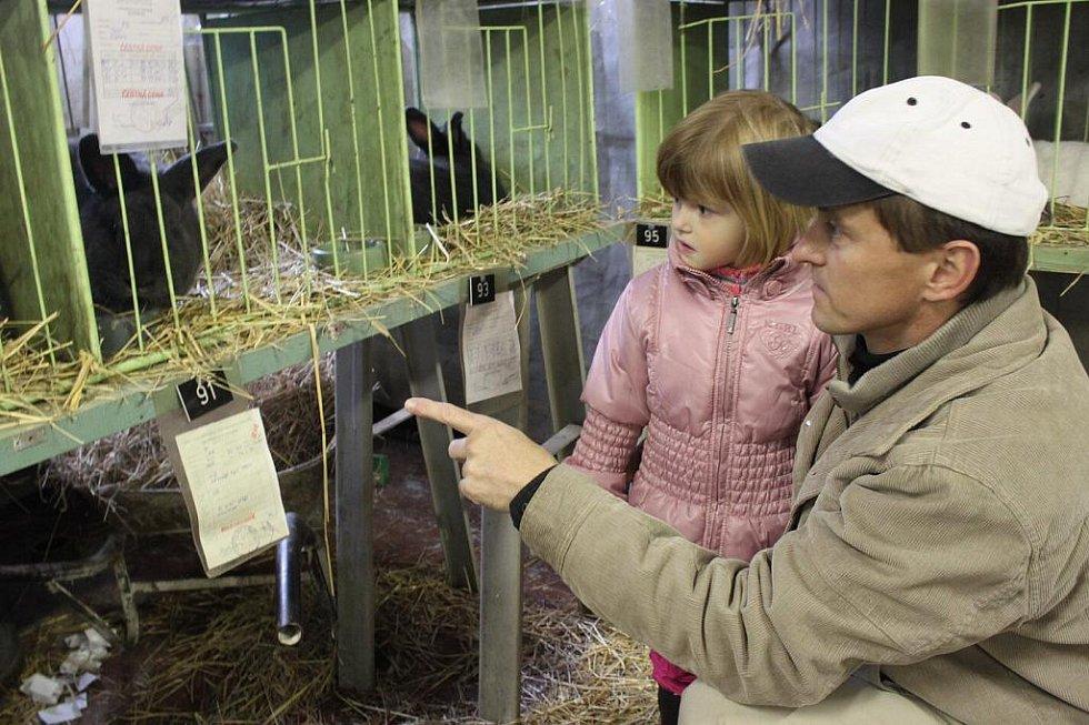 Děti obdivovaly na výstavě nejvíce králíky. Pohladit si je ale nemohly.