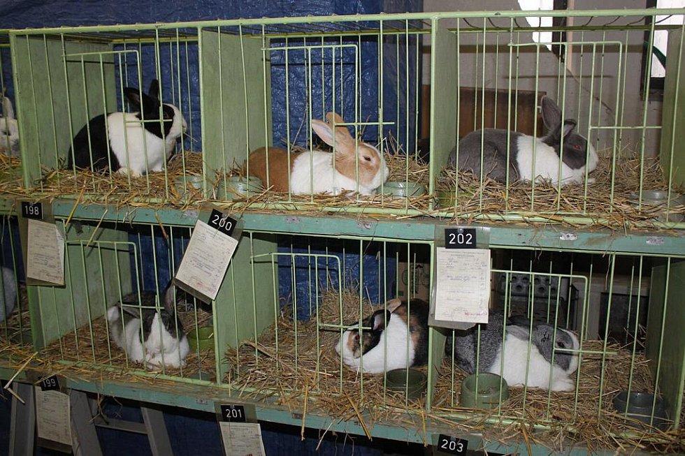 Kolekce šesti různě zbarvených králíků.