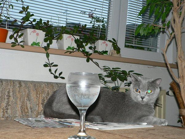 LILY. Přemítá. Odkdy ty piješ vodu?