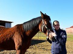 Býmovi se starají o staré,  často zraněné koně.