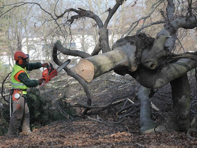 Stromy v nemocnici musely jít k zemi kvůli nové stavbě centrálního pavilonu