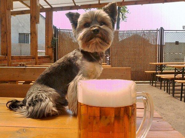 RIKI. Není žádný malý pivo.