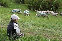 NA ROCHUSU. Při zahájení IX. pastevecké sezony na Rochusu si přijdou na své děti i dospělí.