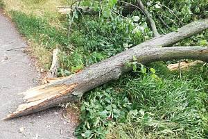 Polámané stromy na břehu Moravy po pondělní bouřce v uherskohradišťské Staré Tenici.