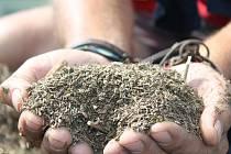 Kmín je nepostradatelnou surovinou v potravinářském průmyslu.