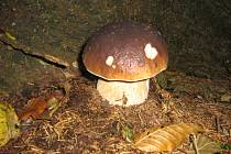 Můj životní úlovek se skrýval v lesích pod Javořinou.