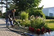 O nemocniční zeleň se nejen v horkém počasí starají naši zahradníci.