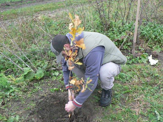 Z vlastní vůle a na vlastní náklady, jenom tak, pro dobrý pocit, se rozhodl sedmadvacetiletý Roman Tinka z Dolní Němčí zasadit v remízku za vesnicí mladý dub.