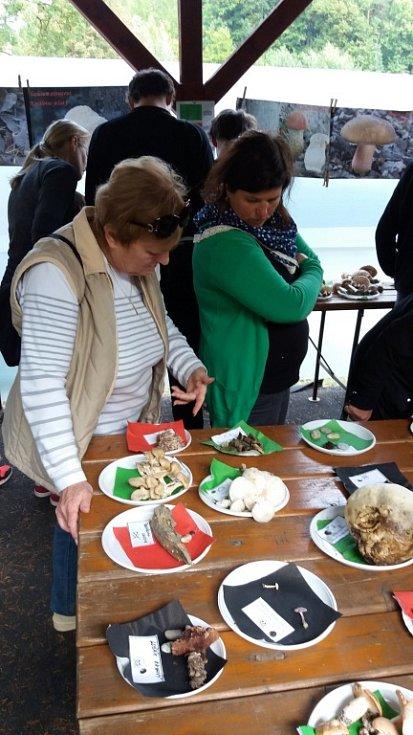 Na výstavě hub vSalaši byly kvidění velmi chutné houbové exempláře, ale i ty, které se dají jíst jen jednou.