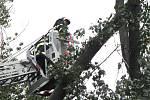 Vyvrácený strom zablokoval ve čtvrtek 7. září krátce před polednem dopravu ve Starém Městě na ulici Velehradská.