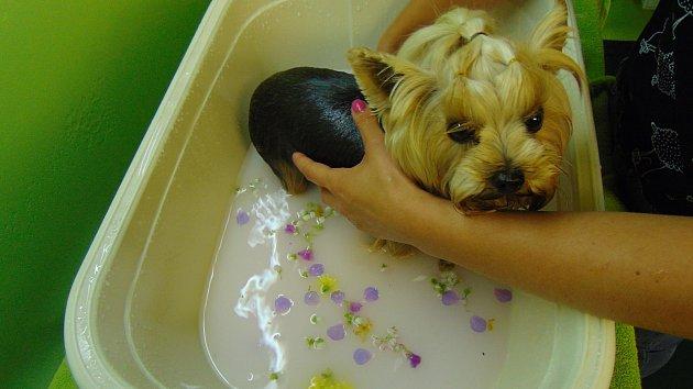 Lakování nehtů, aromatickou koupel nebo třeba bahení masáž. To vše si mohou dopřát pejsci ve speciálních salónech.