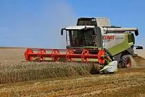 Jako první na Hradišťsku začali o víkendu sklízet obilí v trati Vyrubanec na rozhraní katastru Modré a Jalubí v podhůří Chřibů, kde se do jednadvacetihektarového lánu zralé ozimé pšenice zakously traktory zemědělské společnosti z Huštěnovic.