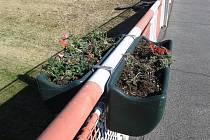 Poničenou květinovou výzdobu na hradišťském Moravním mostě měly tentokrát na svědomí dvě kuny. Foto výzdoby po řádění kun.