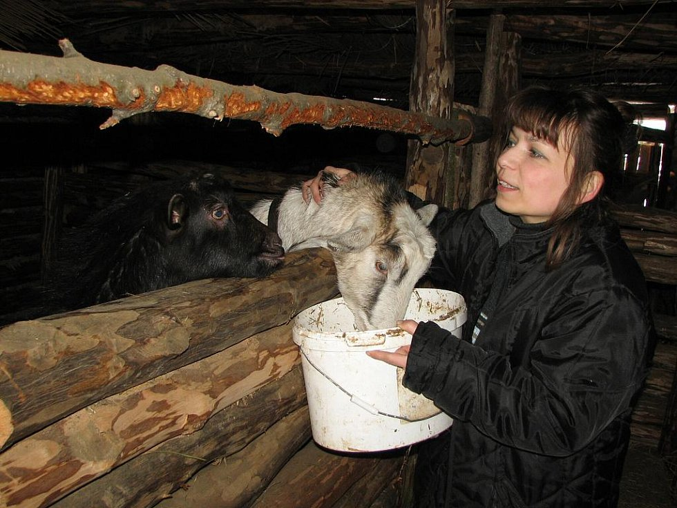 Renata Hrabalová svolává ke krmení kozy i kozlíka Čerta.
