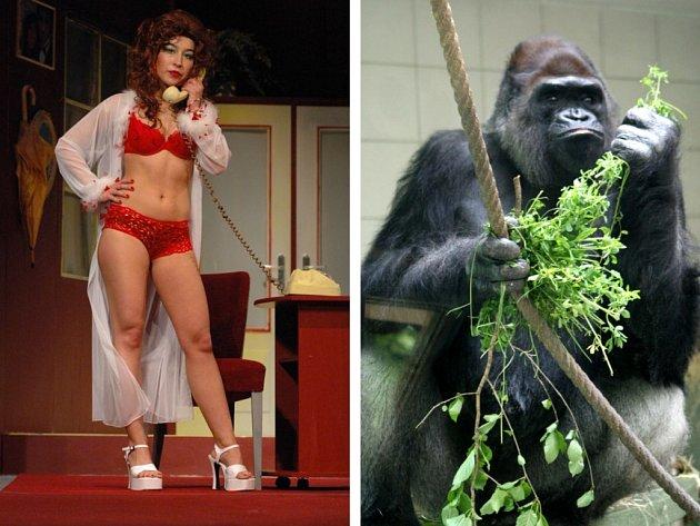 Jitka Josková a gorila Bosso. Fotomontáž.